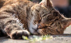 Tierfotografie Kiel - Portrait Katze