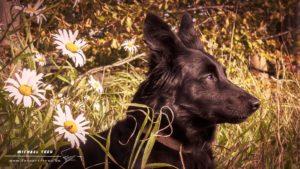 Tierfotografie Kiel - Portrait Layla