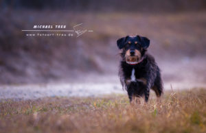 Tierfotografie Kiel - Dackel Albert