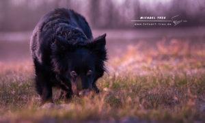 Tierfotografie Kiel - Layla